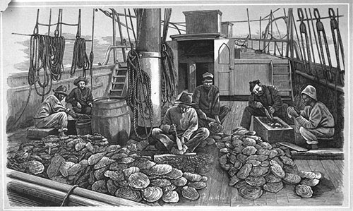 Opening oyster shells on a pearling ship